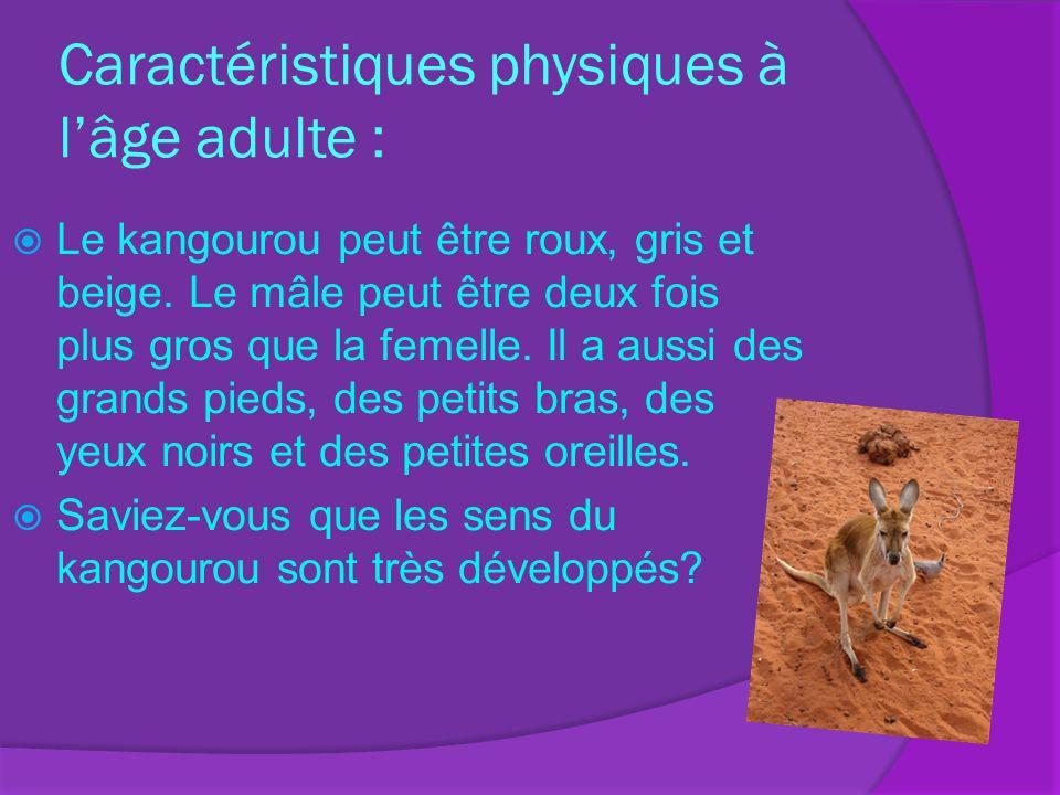 Caractéristiques physiques à lâge adulte : Le kangourou peut être roux, gris et beige. Le mâle peut être deux fois plus gros que la femelle. Il a auss