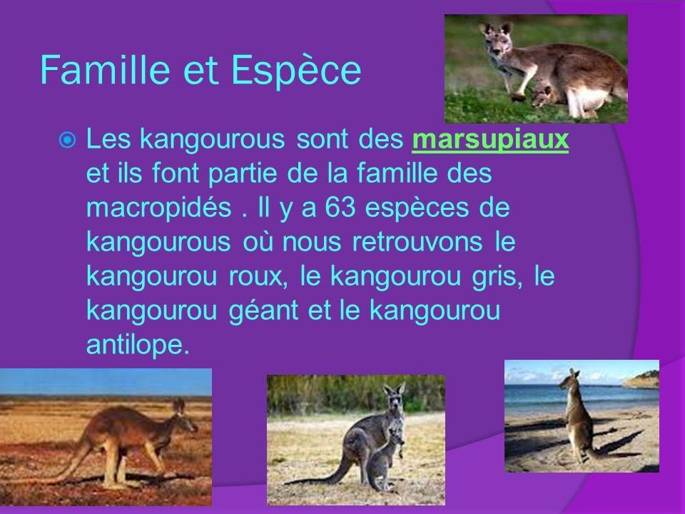 Famille et Espèce Les kangourous sont des marsupiaux et ils font partie de la famille des macropidés. Il y a 63 espèces de kangourous où nous retrouvo