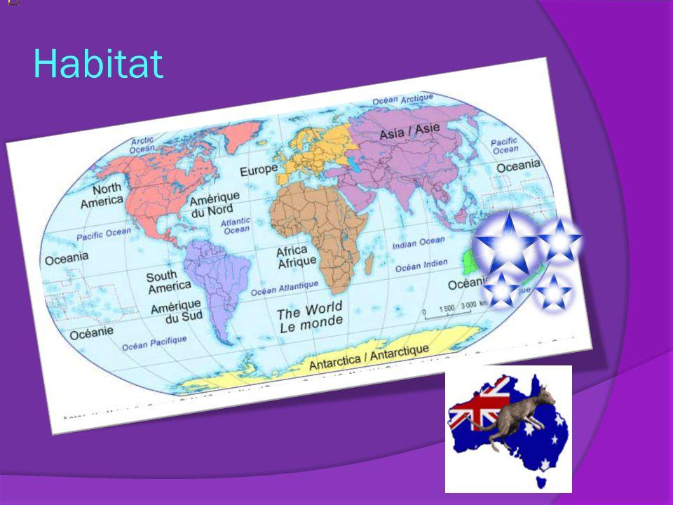 Habitat Nous retrouvons les kangourous en Australie, en Tasmanie, en Papouasie – Nouvelle – Guinée et en Nouvelle Zélande. Lhabitat du kangourou se si
