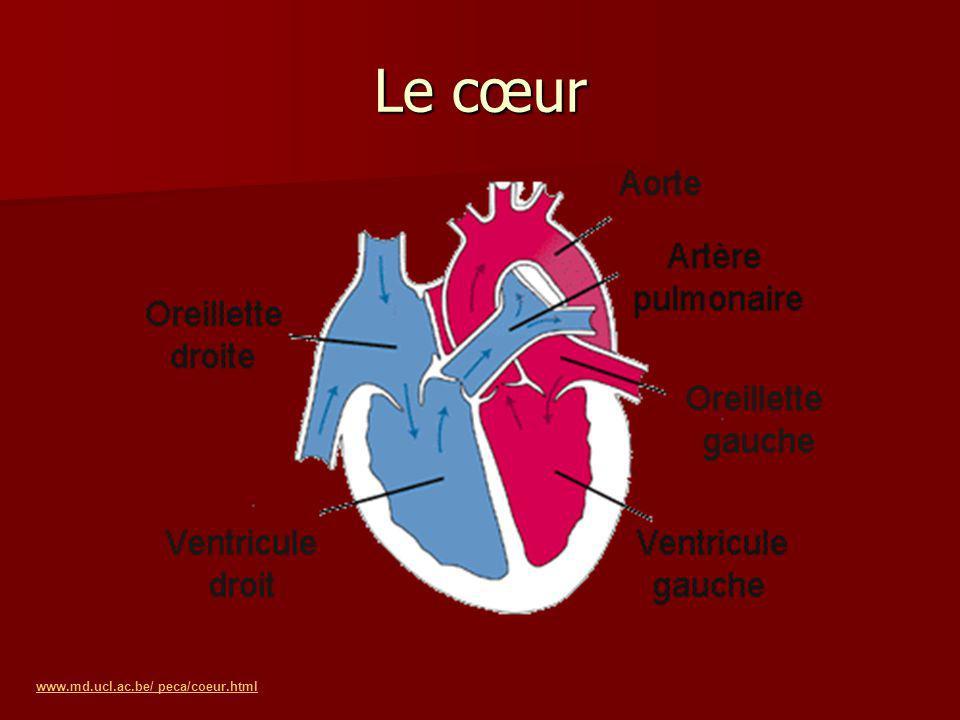 Le cœur www.md.ucl.ac.be/ peca/coeur.html