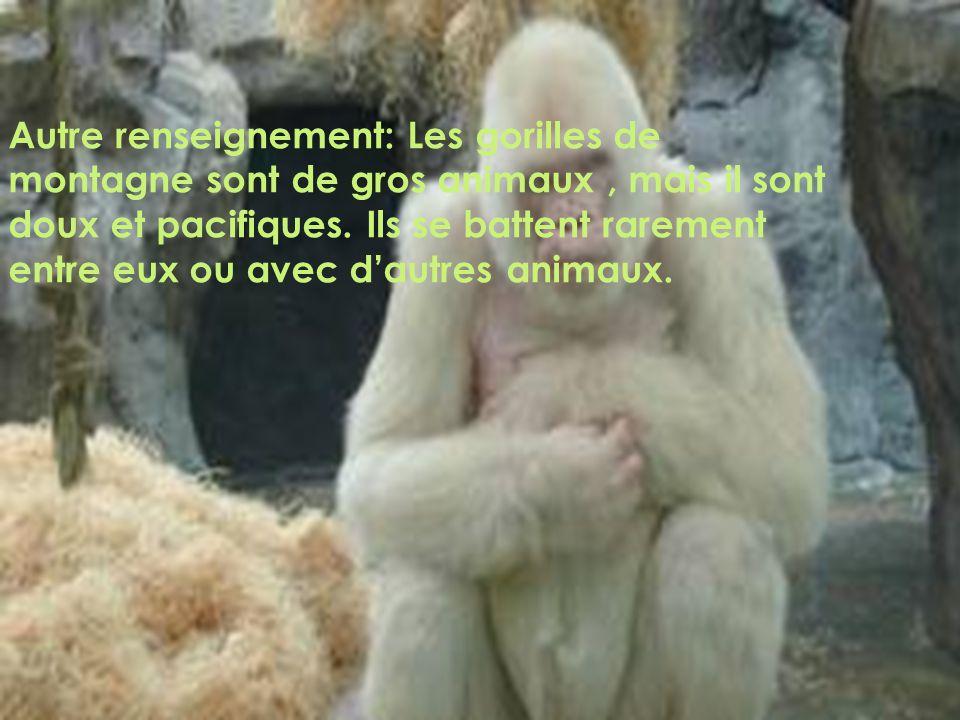 Autre renseignement: Les gorilles de montagne sont de gros animaux, mais il sont doux et pacifiques.