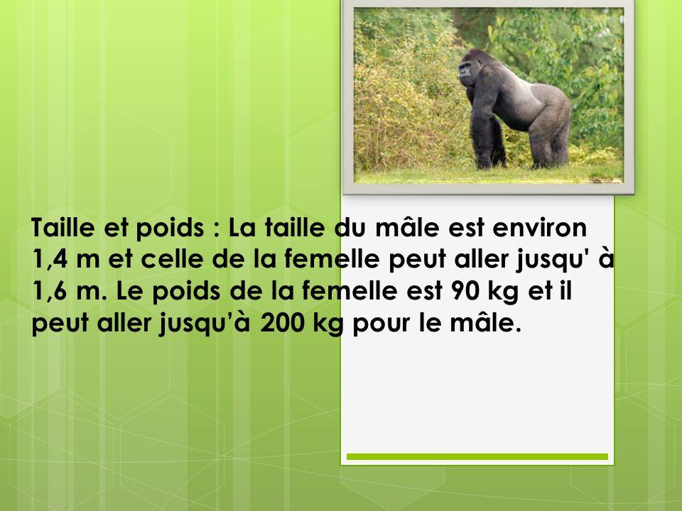 Taille et poids : La taille du mâle est environ 1,4 m et celle de la femelle peut aller jusqu à 1,6 m.