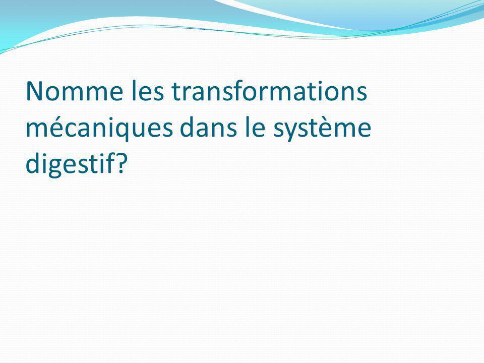 Nomme les transformations mécaniques dans le système digestif?