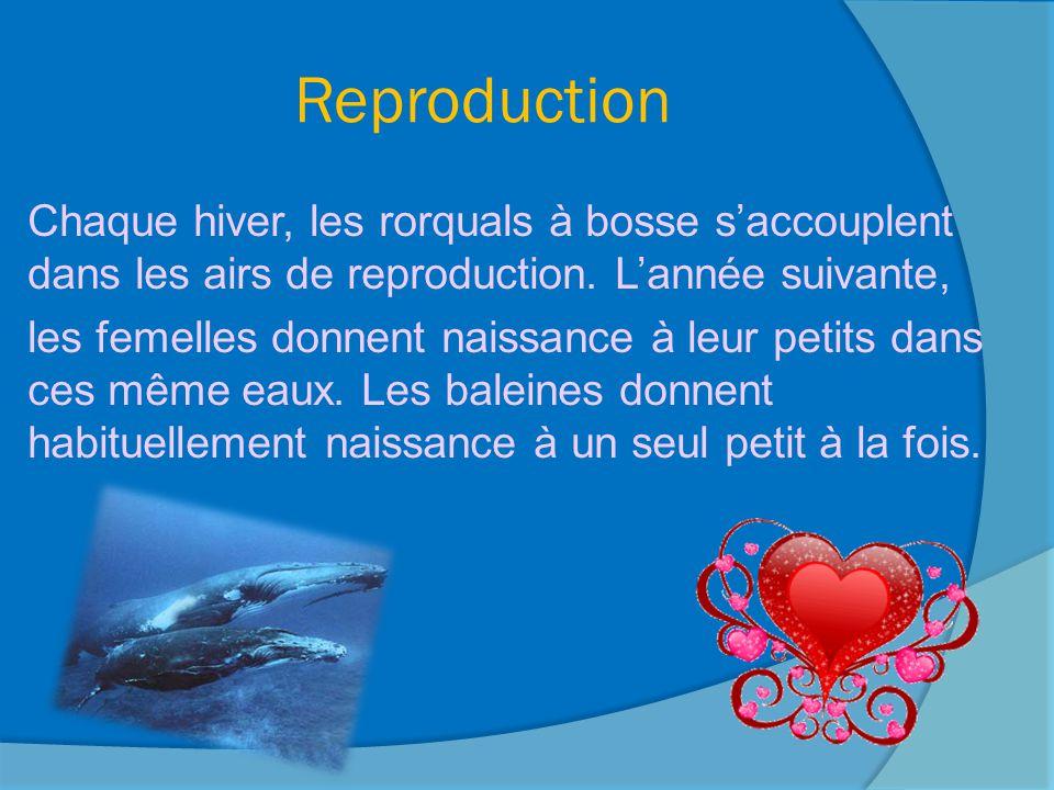 Noms des baleines Nom du mâle: baleine Nom de la femelle: baleine Nom du petit: baleineau