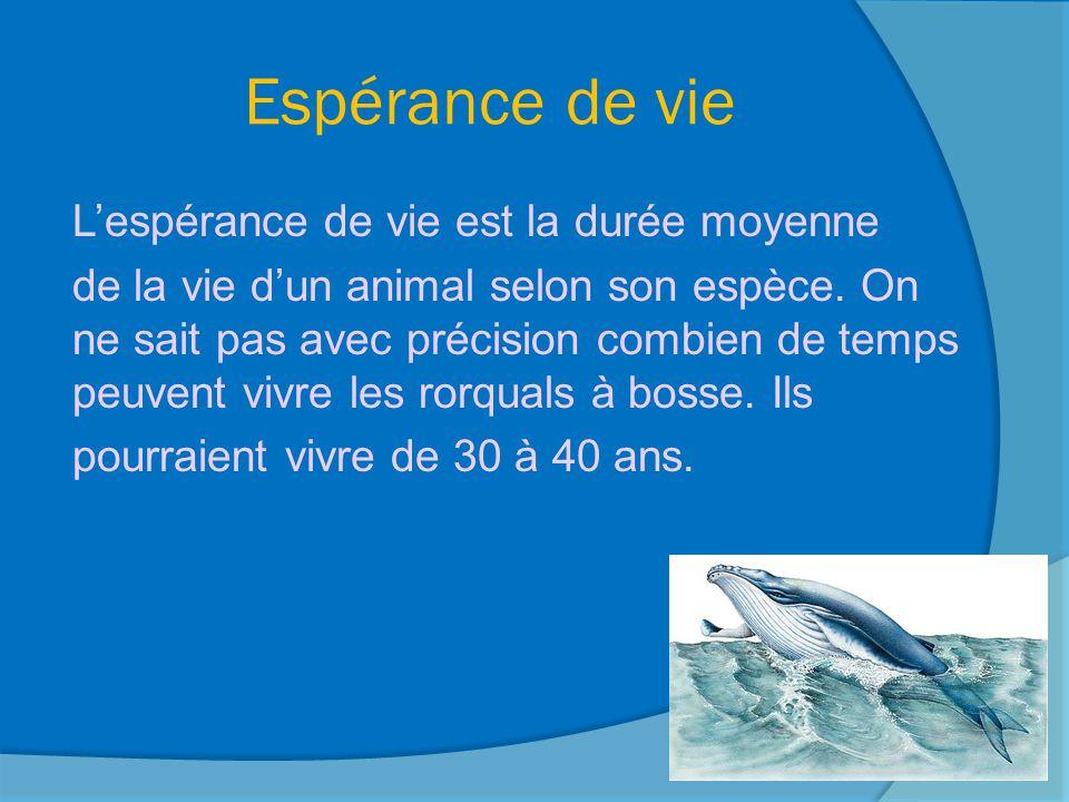 Moyens de défense Le rorqual est une espèce menacée à cause de la pêche à la baleine.