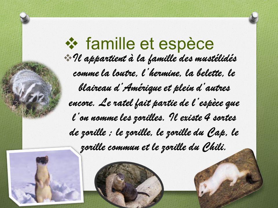 famille et espèce Il appartient à la famille des mustélidés comme la loutre, lhermine, la belette, le blaireau dAmérique et plein dautres encore. Le r