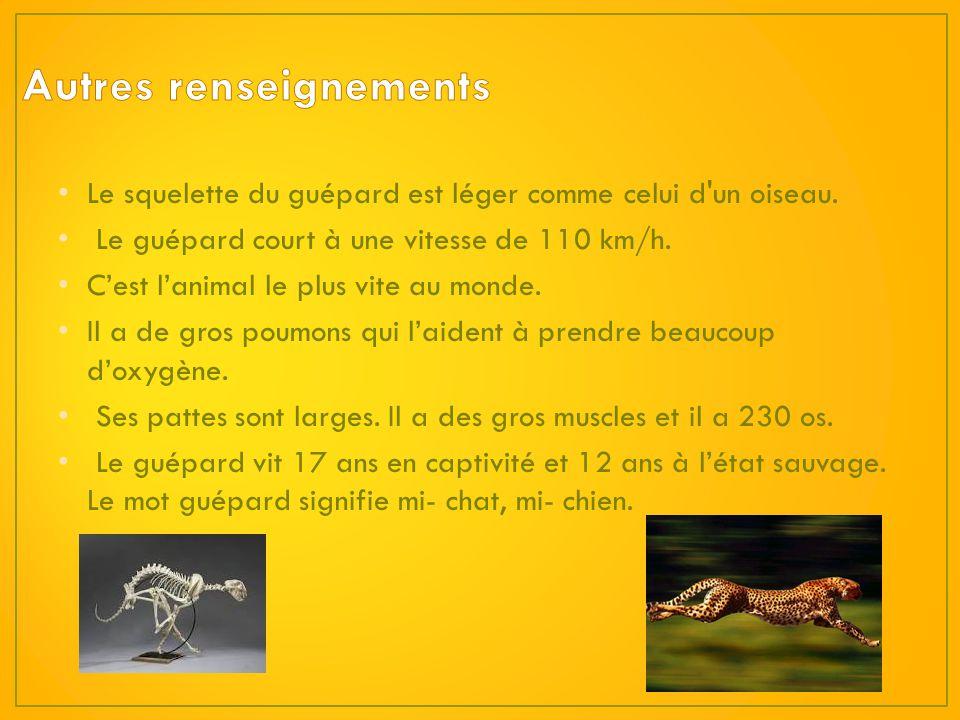 Le nom du petit du guépard est le chaton et le nom de la femelle est la guéparde. Le mois de laccouplement des guépards, cest le mois août. La guépard