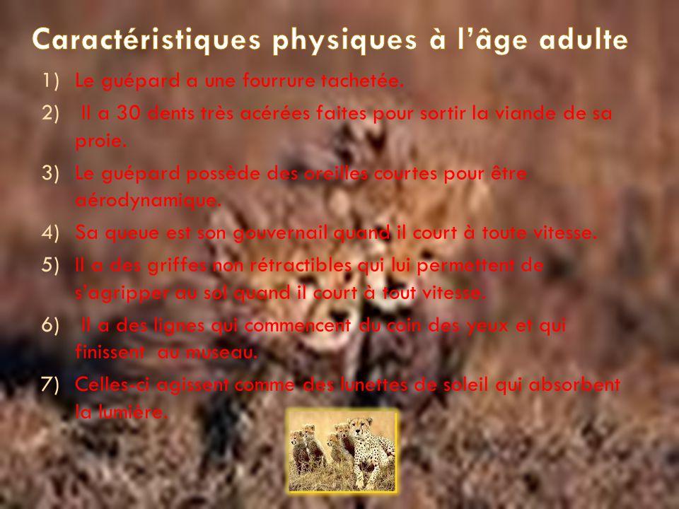 1.Caractéristique physique ……… P.1 2. Taille et poids …………………..P.2 3. Famille et espèce...……………P. 3 4. Habitat ………………………...P. 4 5. Nourriture ……………………