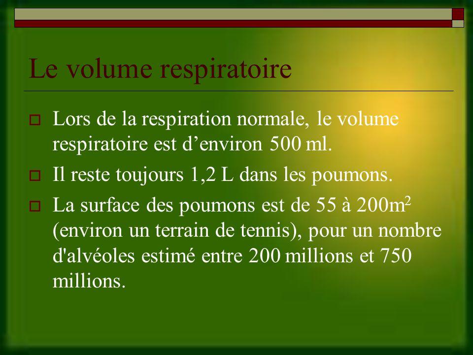 Le volume respiratoire Lors de la respiration normale, le volume respiratoire est denviron 500 ml.