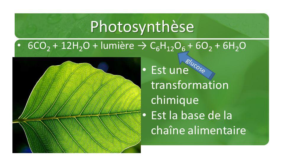 Photosynthèse 6CO 2 + 12H 2 O + lumière C 6 H 12 O 6 + 6O 2 + 6H 2 O Est une transformation chimique Est la base de la chaîne alimentaire glucose