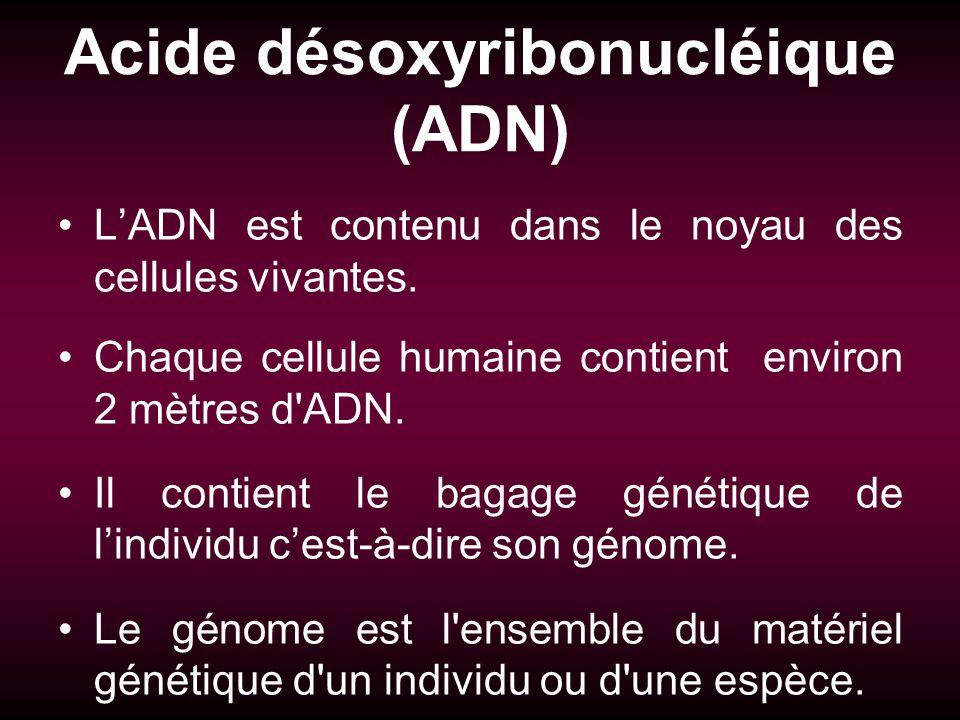 Acide désoxyribonucléique (ADN) LADN est contenu dans le noyau des cellules vivantes. Chaque cellule humaine contient environ 2 mètres d'ADN. Il conti