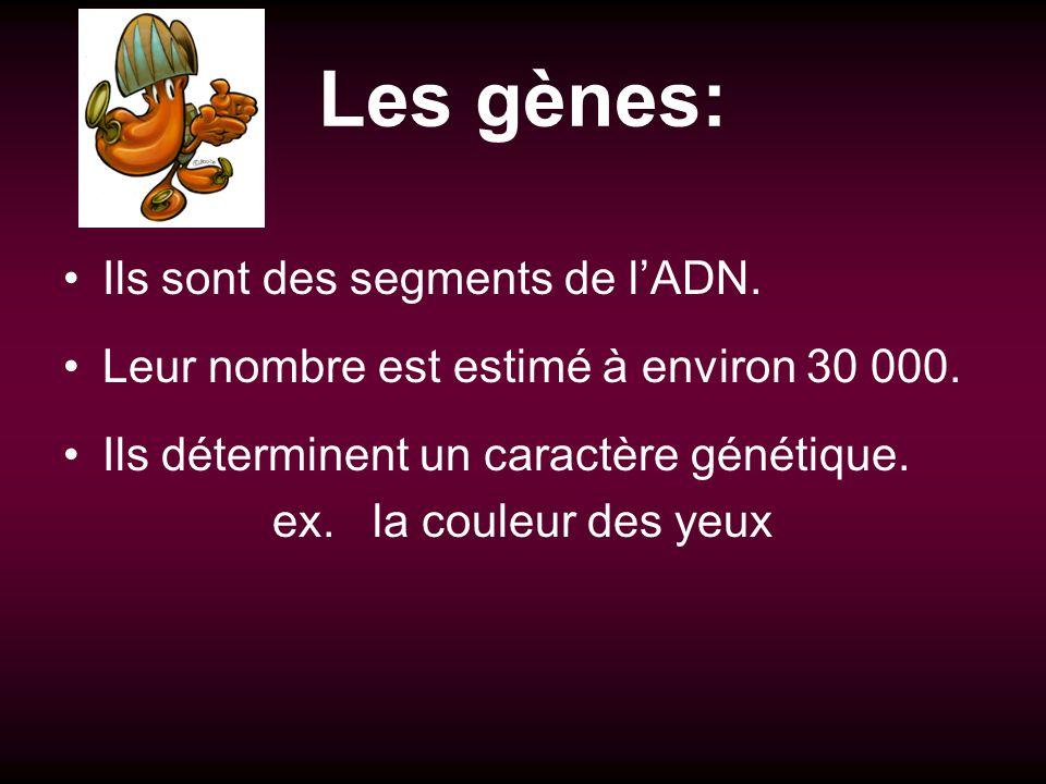 Les gènes: Ils sont des segments de lADN. Leur nombre est estimé à environ 30 000. Ils déterminent un caractère génétique. ex. la couleur des yeux