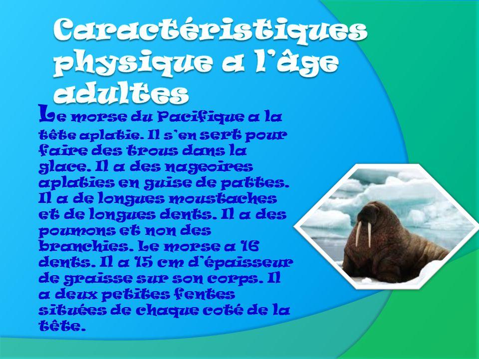 Caractéristiques à l'âge adulte p.3 Taille et poids p.4 Famille et espèces p.5 Nourriture p.6 Habitat p.7 Moyens de défense p.8 Ennemis p.9 Reproducti