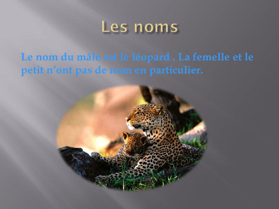 Le nom du mâle est le léopard. La femelle et le petit nont pas de nom en particulier.