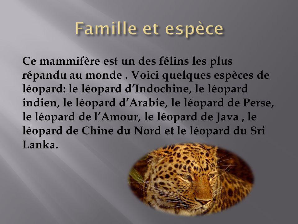 Ce mammifère est un des félins les plus répandu au monde. Voici quelques espèces de léopard: le léopard dIndochine, le léopard indien, le léopard dAra