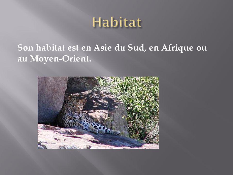 Son habitat est en Asie du Sud, en Afrique ou au Moyen-Orient.