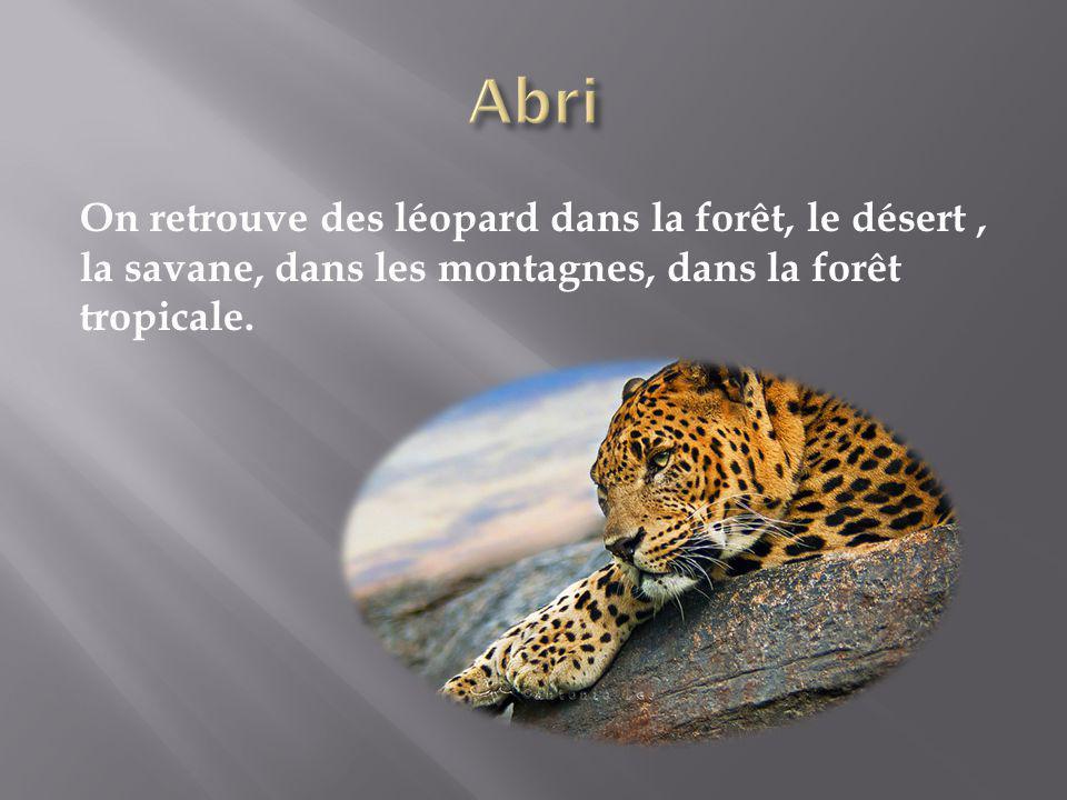 On retrouve des léopard dans la forêt, le désert, la savane, dans les montagnes, dans la forêt tropicale.
