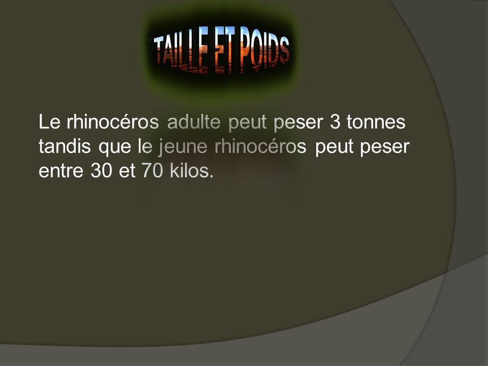 Le rhinocéros adulte peut peser 3 tonnes tandis que le jeune rhinocéros peut peser entre 30 et 70 kilos.