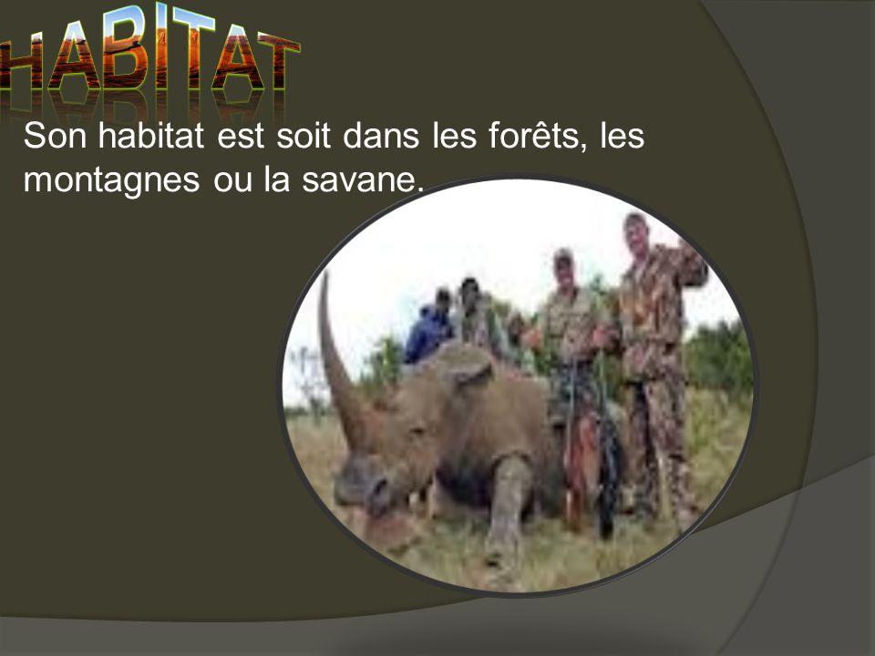 Son habitat est soit dans les forêts, les montagnes ou la savane.