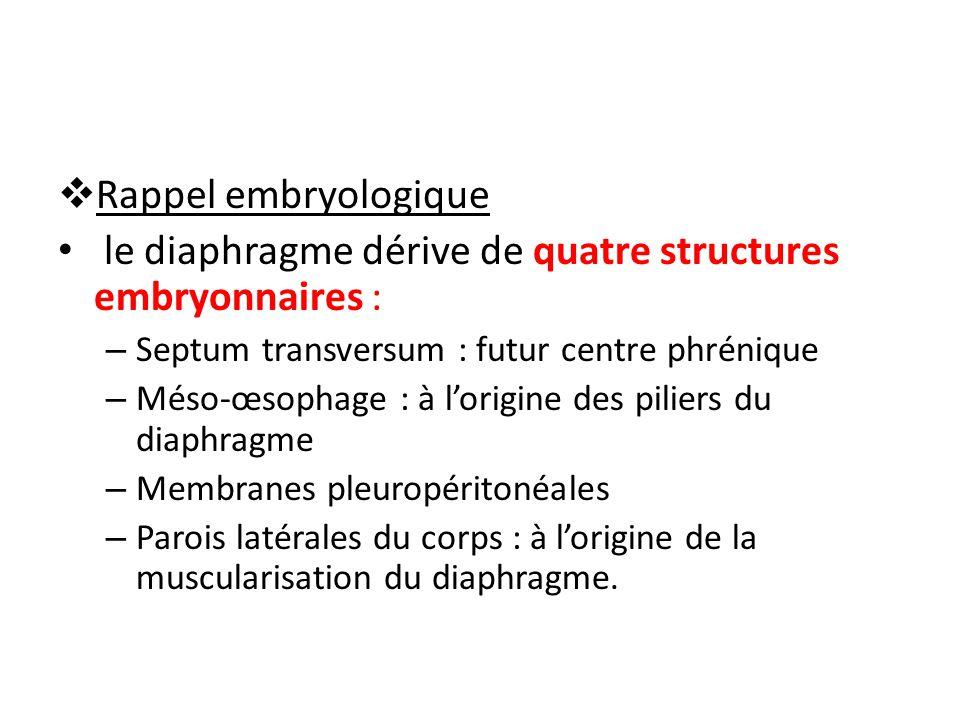 Rappel embryologique le diaphragme dérive de quatre structures embryonnaires : – Septum transversum : futur centre phrénique – Méso-œsophage : à lorigine des piliers du diaphragme – Membranes pleuropéritonéales – Parois latérales du corps : à lorigine de la muscularisation du diaphragme.