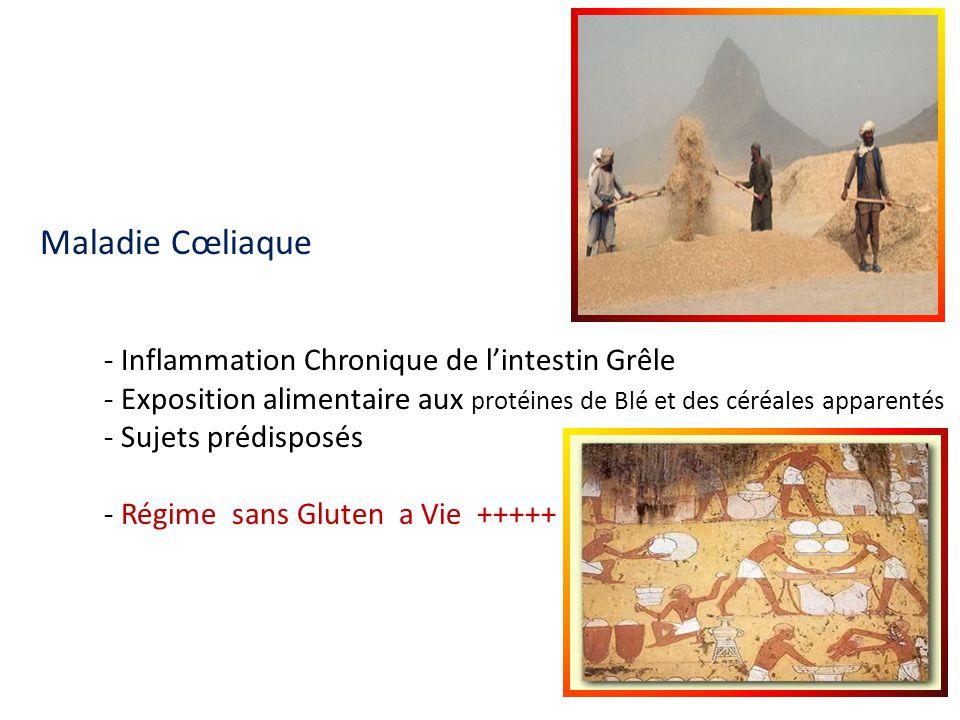 Maladie Cœliaque - Inflammation Chronique de lintestin Grêle - Exposition alimentaire aux protéines de Blé et des céréales apparentés - Sujets prédisp