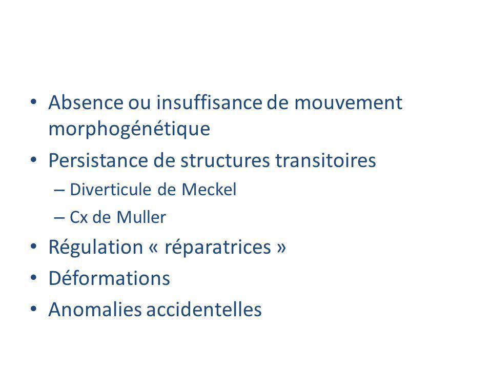 Absence ou insuffisance de mouvement morphogénétique Persistance de structures transitoires – Diverticule de Meckel – Cx de Muller Régulation « répara
