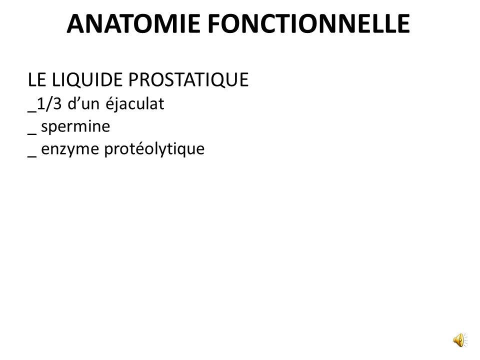 ANATOMIE FONCTIONNELLE DANS LA MICTION NORMALE AU COURS DES RAPPORTS