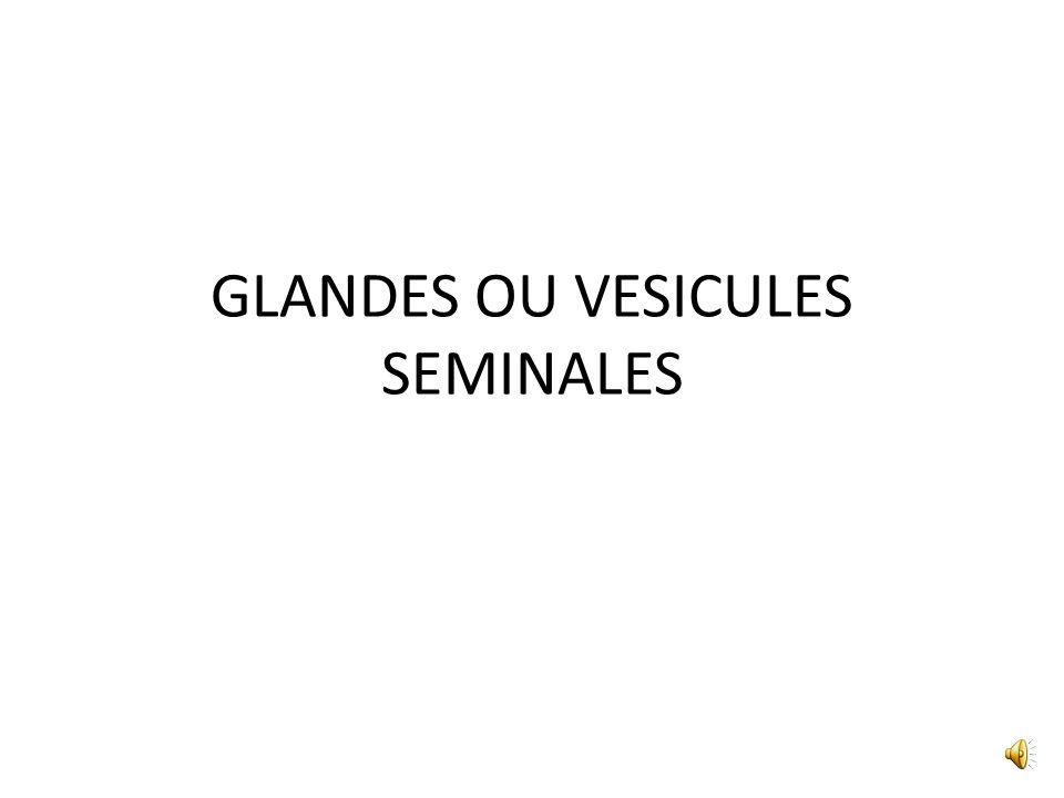 ANATOMIE FONCTIONNELLE LE LIQUIDE PROSTATIQUE _1/3 dun éjaculat _ spermine _ enzyme protéolytique