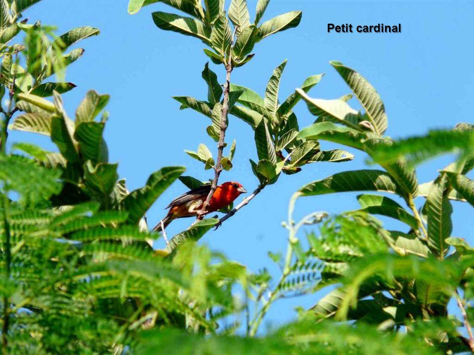 Il existe une centaine d'espèces d'oiseaux, la plupart typiques des terres africaines et malgaches voisines. Autrefois mis à part les rivages et les p