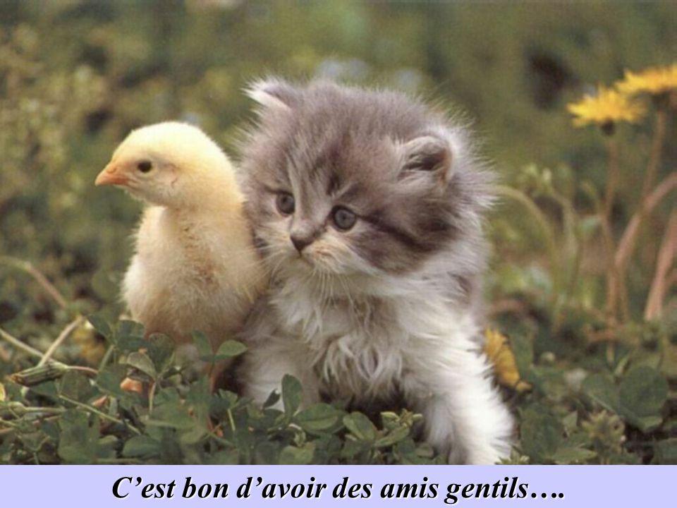 Profitez bien de cet instant de gentillesse….