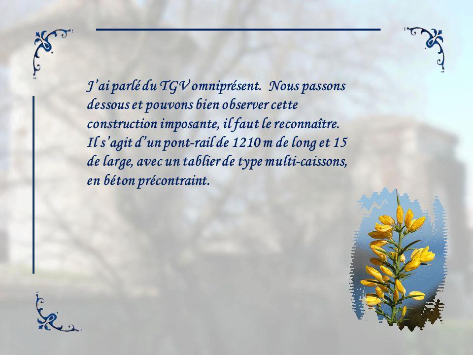 Lajonc de Provence