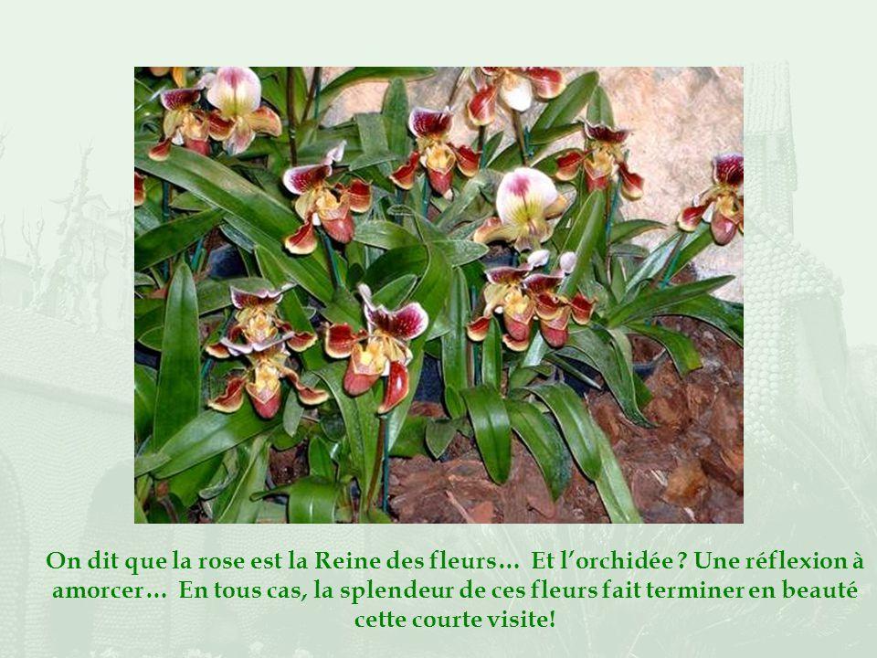 Il est organisé par lAssociation des Orchidophiles Epiphytophyles de France.