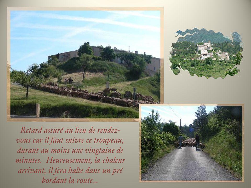 Allemagne-en- Provence Le château, avec son donjon du XIIe siècle et de belles façades du XVIe, sélève en bordure du Colostre.