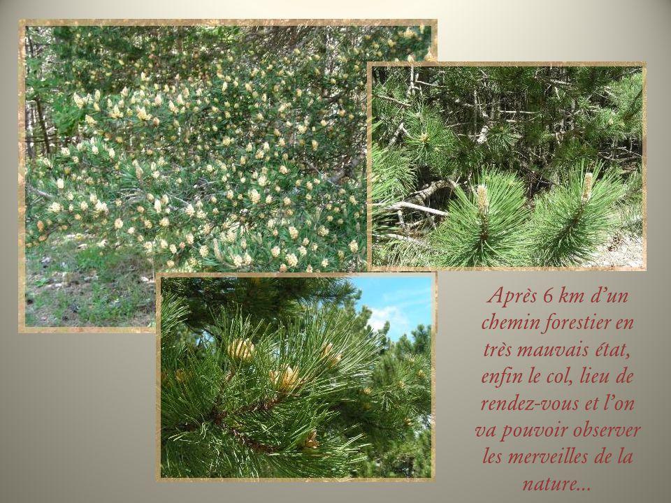 Après 6 km dun chemin forestier en très mauvais état, enfin le col, lieu de rendez-vous et lon va pouvoir observer les merveilles de la nature…