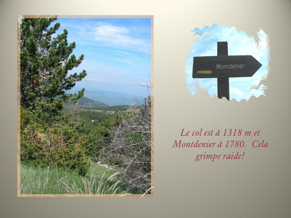 Le col est à 1318 m et Montdenier à 1780. Cela grimpe raide!