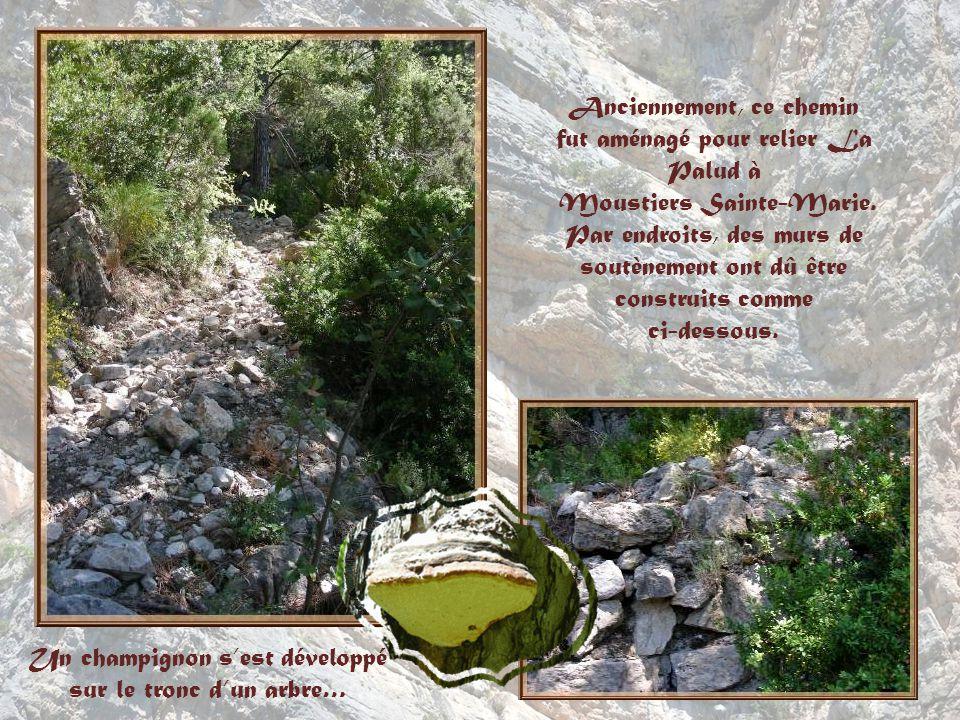 Ces roches de tuf constituent un terrain de prédilection pour la reproduction du vautour fauve et du faucon pèlerin.