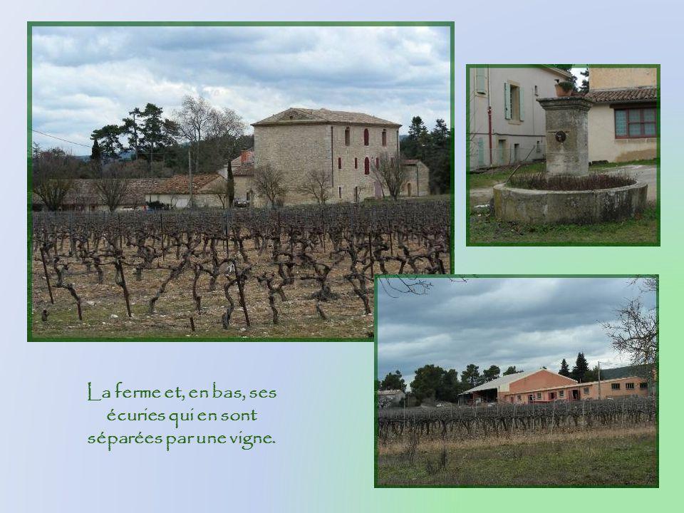 Une très grosse ferme soffre bientôt à notre vue. Elle fait partie du Domaine Les Auquiers et produit son vin et son huile dolive, en plus de disposer