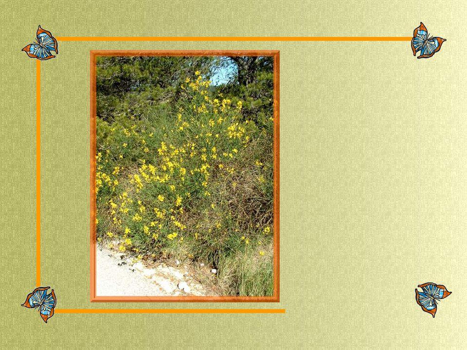 Musique : MENDELSSOHN Spring Song from Songs Without Words par Balazs Szokolay Réalisation : Marie-Jo 1er juin 2006