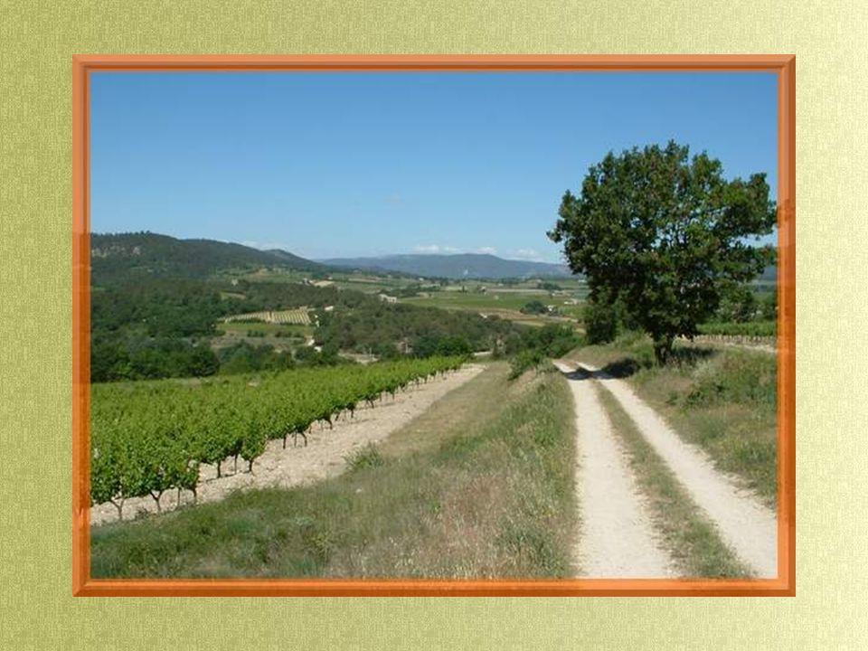 Après la descente, nous retrouvons la plaine et suivons le petit chemin qui nous conduit, tout en douceur, jusquau village, à travers les vignobles.