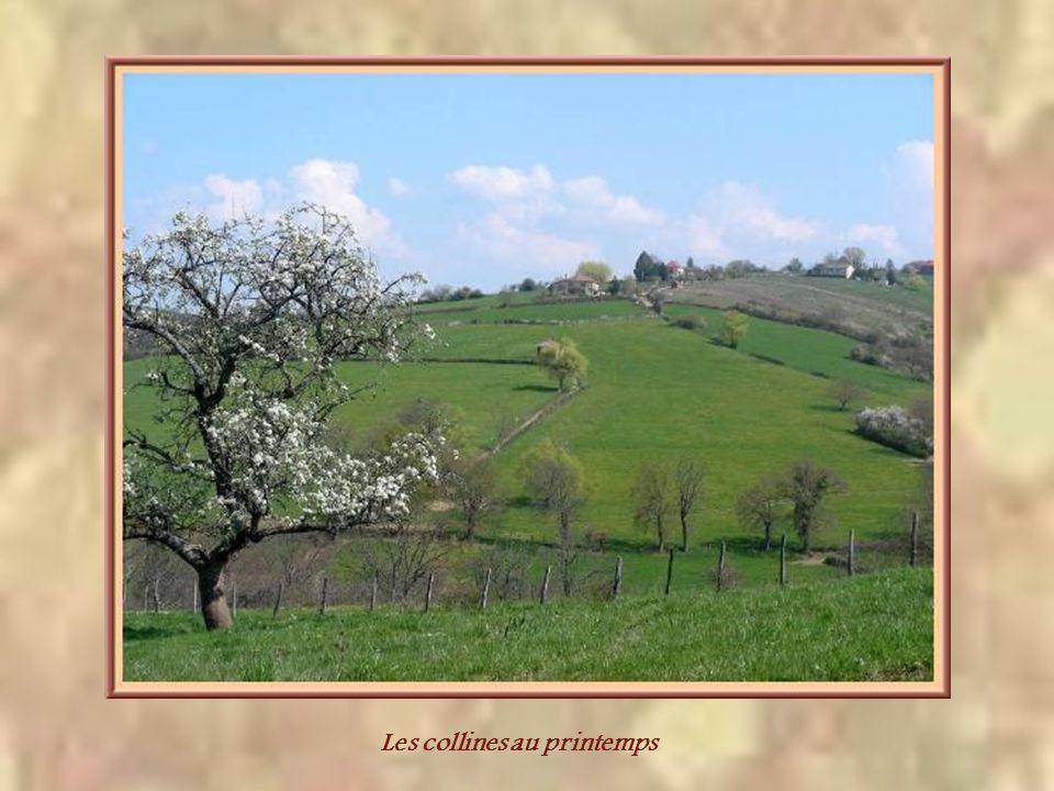 Le Brionnais se confond avec le Charolais et sa principale richesse est lélevage.
