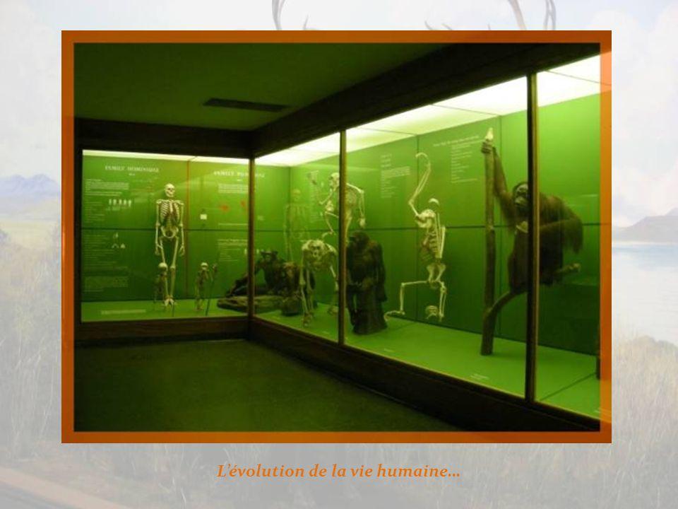 Sous le thème de la biologie et de lévolution humaine, le musée offre une gamme de présentations qui retracent la vie humaine.