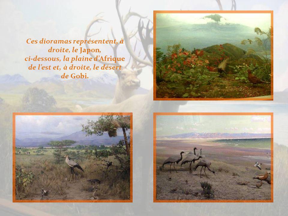 Dans la salle des oiseaux du monde, ci-haut, à gauche, dans les Andes, à droite, la Georgie du sud et, en bas, le condor de la pampa.