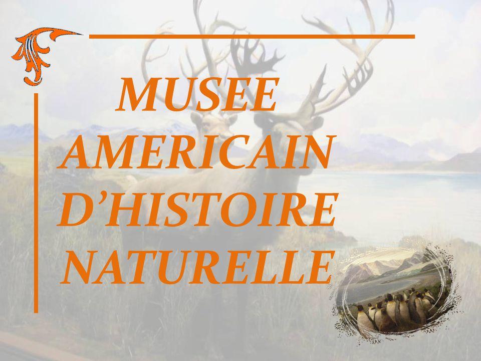 MUSEE AMERICAIN DHISTOIRE NATURELLE