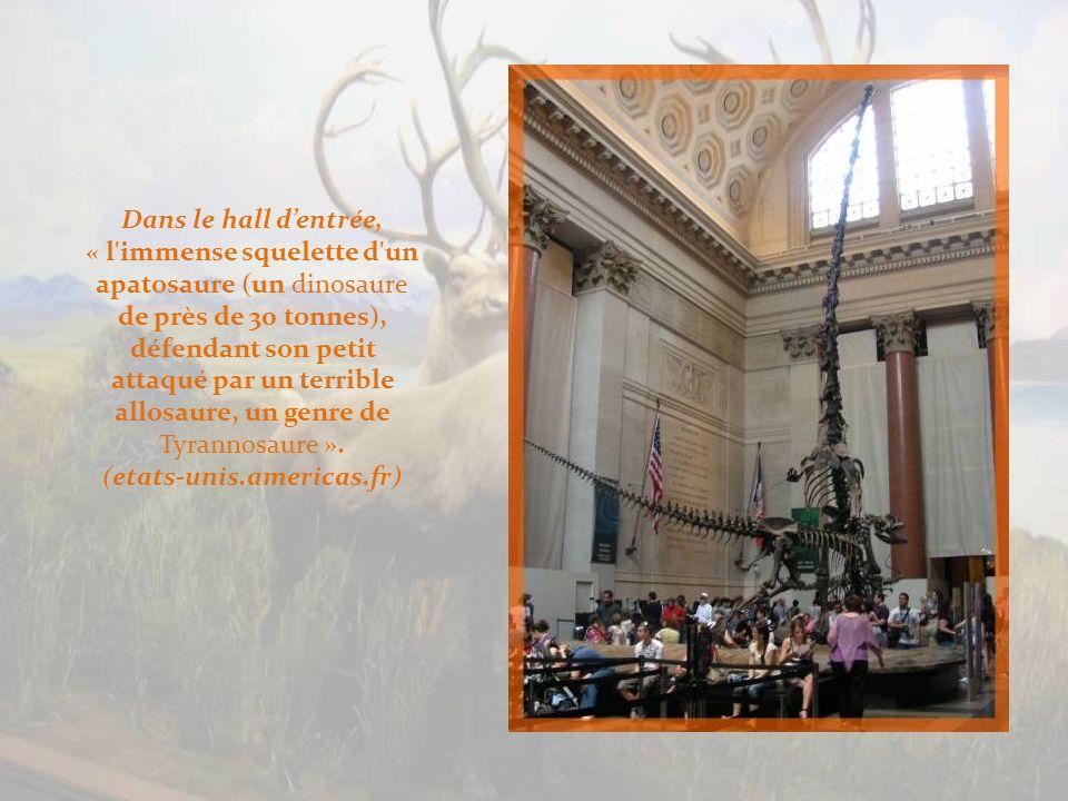 Dans le hall dentrée, « l immense squelette d un apatosaure (un dinosaure de près de 30 tonnes), défendant son petit attaqué par un terrible allosaure, un genre de Tyrannosaure ».