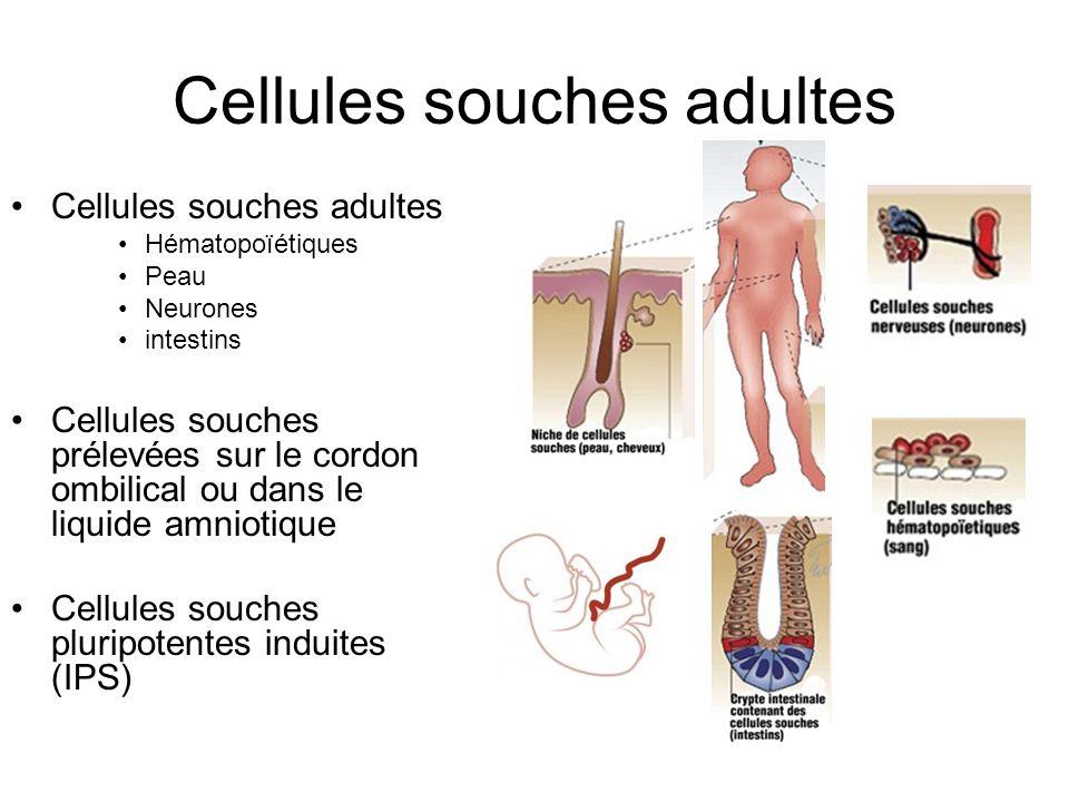 Cellules souches adultes Hématopoïétiques Peau Neurones intestins Cellules souches prélevées sur le cordon ombilical ou dans le liquide amniotique Cel