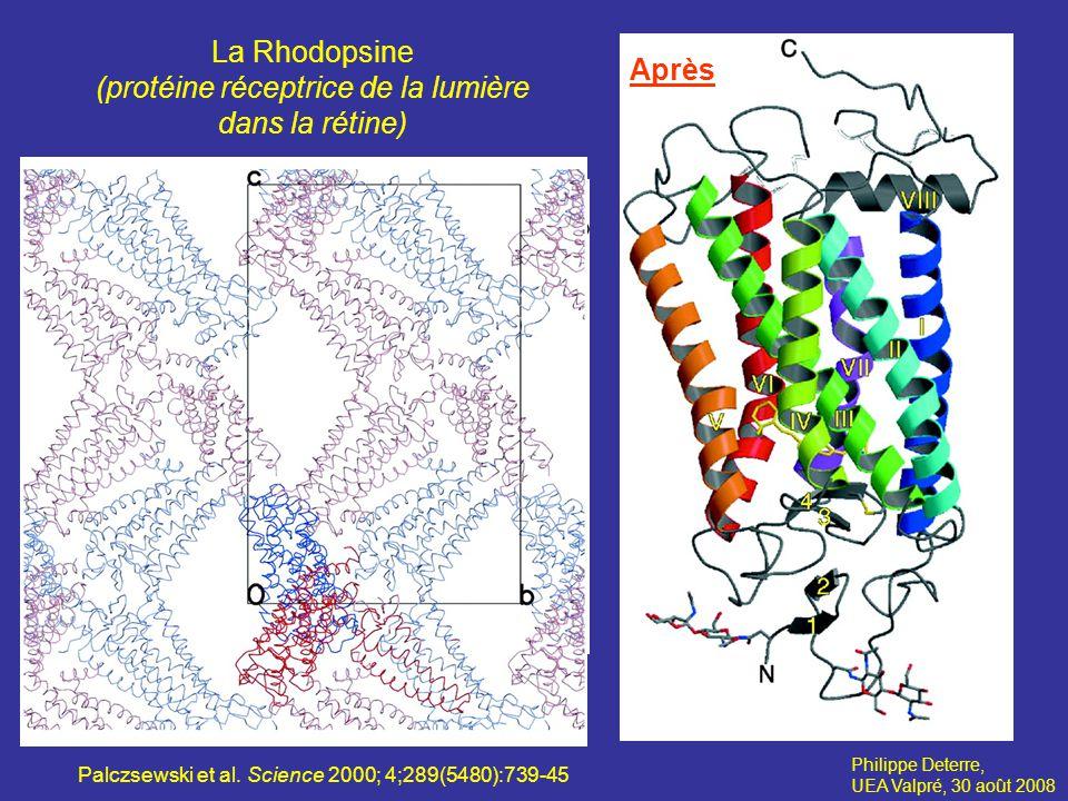 La Rhodopsine (protéine réceptrice de la lumière dans la rétine) Philippe Deterre, UEA Valpré, 30 août 2008 Avant la cristallographie Après Palczsewski et al.
