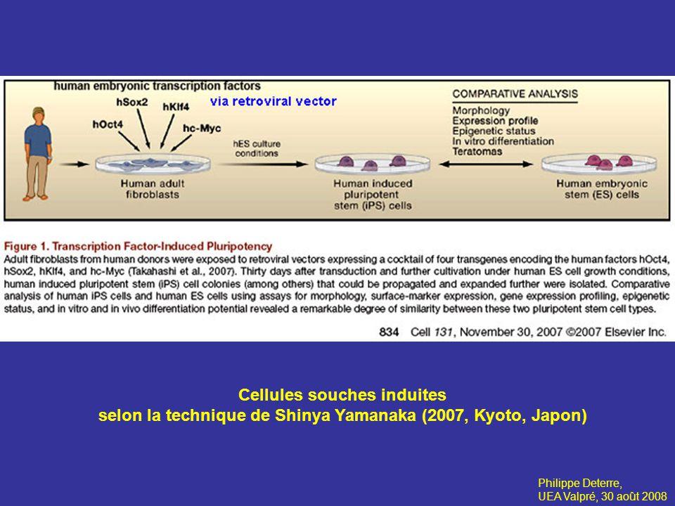 Cellules souches induites selon la technique de Shinya Yamanaka (2007, Kyoto, Japon) Philippe Deterre, UEA Valpré, 30 août 2008