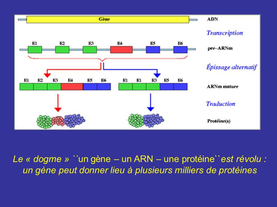 Le « dogme » ``un gène – un ARN – une protéine``est révolu : un gène peut donner lieu à plusieurs milliers de protéines