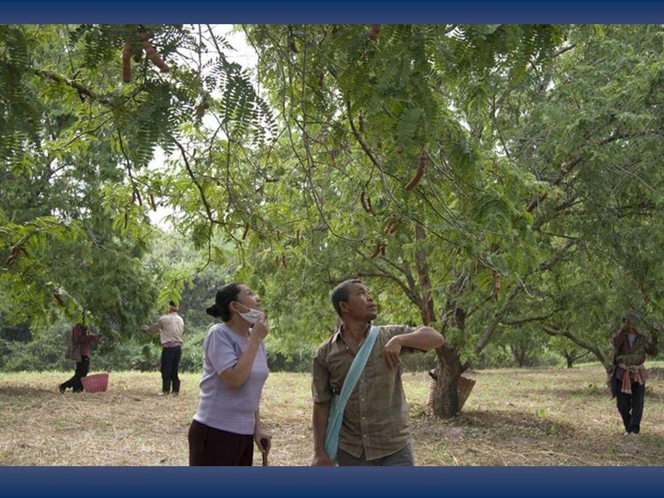 Thanapat Saisayma Dans le rôle de Boonmee Natthakarn Aphaiwonk Dans le rôle de Huay Kanokporn Thongaram Dans le rôle de Roong Wallapa Mongkolprasert Dans le rôle de La princesse Jenjira Pongpas Dans le rôle de Jen