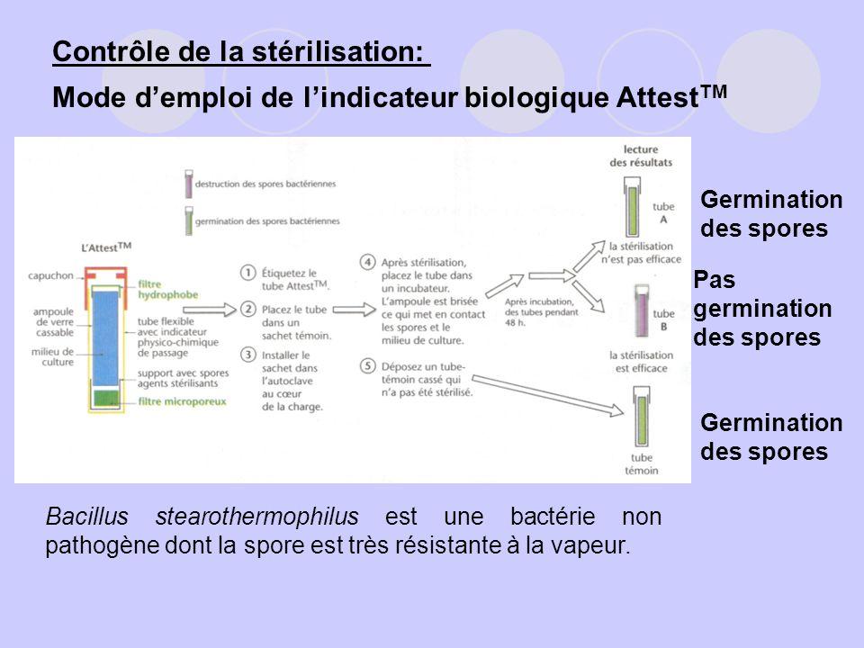 Germination des spores Pas germination des spores Germination des spores Bacillus stearothermophilus est une bactérie non pathogène dont la spore est
